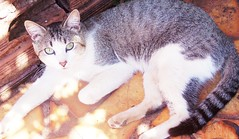Fhyon ( Lady Lynn ) Tags: cats pets gatos