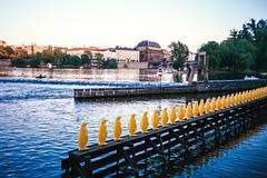 Yellow Penguins (hiphopmilk) Tags: film yellow museum analog 35mm river penguin lomo lca lomography europe republic fuji czech prague superia praha analogue vltava kampa 135film jaredyeh hiphopmilk