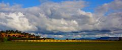 Canola Clouds (D-GaP Photos) Tags: sky cloud landscape farm fields dgap conola