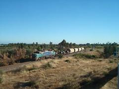 En la ruta de la E-32 (daniel_01986) Tags: tren carros eeg breda locomotora electrica e32 fepasa e3208 trencarga