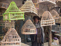 The Birdman of Kabul, Bird Bazaar of Kabul, Afghanistan