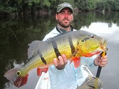 Amazonia 2012 (46)