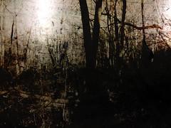 Dark Woods (Rossdxvx) Tags: abstract art texture silhouette dark woods noir shadows michigan surrealism surreal overlay textures minimalism textured 2015