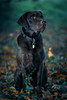 taylor9-1 (Florian Jakob Rothlehner) Tags: hund hasutier drausen blitz strobist 6d canon bokeh lastolite firefly yongnuo
