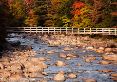 Fall Color On The Kanc, Lincoln, New Hampshire (edleckert) Tags: bridge plant color tree horizontal photography day unitedstates footbridge newhampshire fallfoliage northamerica lincolnwoods newenglandusa kancamagusscenicbyway deciduoustree easternusa