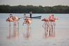 Pink Mirrors (Xavy Vp) Tags: life pink wild naturaleza rio méxico nikon flamingos yucatán rosas vp 70300mmf456 lagartos xavy 1224mmf4 d7100