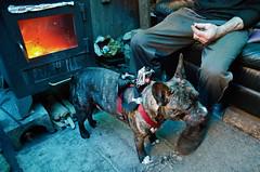 noroombutaview-Liesbet en Fons-1398-2500 (truihanoulle) Tags: film homeless rep hond shelter gent fons armoede daklozen noroombutaview
