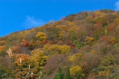 10Seya Highland (anglo10) Tags: field japan kyoto autumnleaves