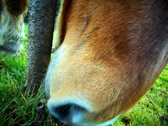 (odrikk) Tags: horse nature de cheval trai museau