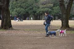 DSC02837.jpg (randy@katzenpost.de) Tags: winter japan yoyogikoen shibuyaku tkyto japanurlaub20152016