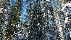 20160101_111046 (mjfmjfmjf) Tags: snow oregon favorited trilliumlake 2016 snoeshoe