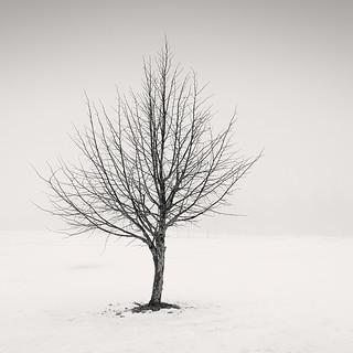 Maiden's Tree