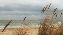 Ruegen 19 Am Strand (Wolfgang Staudt) Tags: ruegen inselruegen ostsee ostseekueste mecklenburgvorpommern deutschland insel kueste strand meer bodden wieke lagunen norden abgelegen attraktion tourismus ferien urlaub sehenswert landwirtschaft