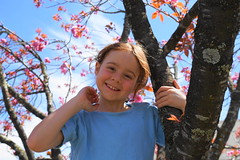 blue and pink (Blue Mtns. bush girl off on Holidays!) Tags: granddaughter leura blossom tree