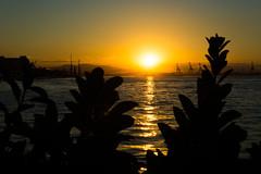 DSC_3180 (sergeysemendyaev) Tags: 2016 rio riodejaneiro brazil paradadosmuseus museum museudoamanha sun sunset scenery landscape dusk beautiful silhouette winter          beauty water reflection   cidadeolimpica