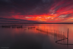 My Dreamed Sunset III. [Explored & FP 10-30-2016] (dasanes77) Tags: canoneos6d canonef1635mmf4lisusm tripod landscape seascape cloudscape waterscape clouds horizon reflections shadows longexposure red orange sunset nets water calm albuferaofvalencia valencia dramaticsky neutralgraduated3stepsfilter