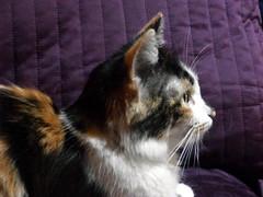 Desi (David del Rey78) Tags: gato gata mascota pet animal fauna kitty pussycat menino portrait retrato fur whiskers bigote cute sweet