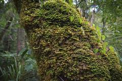 Waipuoa Forest-3