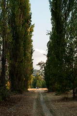 Bologna (Eleonora Sacco   Pain de Route) Tags: via degli dei turismo toscana emilia romagna bologna firenze appennino betulle