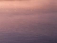 the ocean antidote (birdcloud1) Tags: icm intentionalcameramovement freefromfencesfriday water light pink movement peace amandakeoghphotography amandakeogh birdcloud1 canonsx60hs sx60 solongleonardcohen ocean antidote sooc hffff