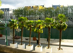 Palms along the Seine (jglsongs) Tags: paris france europe riverseine seine palms palmtrees pottedpalmtrees