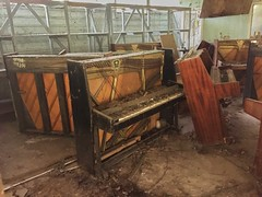 Pripyat Piano Shop-(Chernobyl Exclusion Zone)_11 (Landie_Man) Tags: none pripyat chernobyl looted looting disused closed music piano pianist culture bars beats frets instrument grand fine radioactive radiation ionising shop store shut buy bought purchased forgotten play nuclear power plant the zone ukraine ussr cccp ccpp soviet union