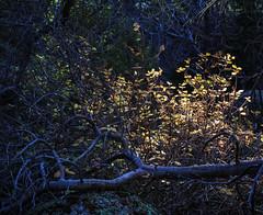 (LuminousWest) Tags: sigma dp dp2 dp2q quattro sigmaquattro foveon landscape autumn fall dp2q3470 luminouswest luminous west x3f