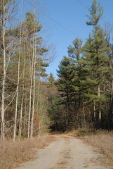 DSG_7380 For a short distance the trail follows the driveway (Greying_Geezer) Tags: 2016 hazelbird ncc natureconservancyofcanada hamiltontownship ort hiking naturereserves