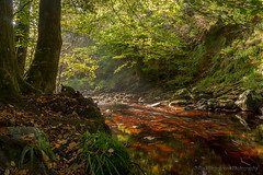 Valle de la  Hogne (rudi.verschoren) Tags: walloon wallonia water canon 70 d light landscape flow stream woodland trees exposure eos europe endless reflectie reflection river outdoor golden green red yellow colors
