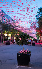 Rue Saint-Catherine East - Montreal, Canada (ChrisGoldNY) Tags: chrisgoldny chrisgoldphoto chrisgoldberg sony sonyalpha sonya7rii bookcover bookcovers albumcover albumcovers licensing forsale canada canadian quebec northamerica travel frenchcanada gayvillage montreal pink flowers magichour urban city ruesaintcatherine decorations night streets