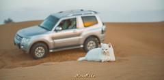 KITTY (memoouda) Tags: lexus bmw gmc chevrolet dubai uae desert porsche toyota light nikon نيكون لكزس بورش جمس صحراء دبي