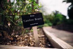 Botanical Gardens (jaminjan96) Tags: travel adventure explore garden nature botanical urban city brewery pearl industrial photography