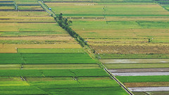 Ricefield Color (hauptmann photo) Tags: rice ricefield color landscape telephoto diagonal cinematic composition indonesia yogyakarta country village sawah green ijo travel traveling tourism tropical touring traditional
