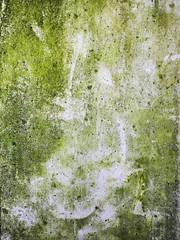 Chlorophyll (jaxxon) Tags: 2016 d610 nikond610 jaxxon jacksoncarson nikon nikkor nikon105mmf28gvrmicro nikkor105mmf28gvrmicro 105mmf28gvrmicro 105mmf28 105mm f28 28 f28g afs vr macro micro prime fixed lens abstract abstraction concrete moss mossy lichen chlorophyl chlorophyll organisms algae mold moldy mildew mildewy ladybug beetle little