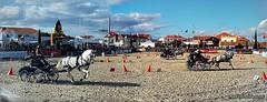 A arte (nrloliveira) Tags: vida mestria cavalos goleg