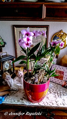 Scöne Orchidee (Bernsteindrache7) Tags: autumn color flora fauna flower green bloom blossom blume home house handy indoor pink