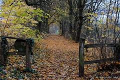 Spaziergang (Sockenhummel) Tags: chorin wald fuji x30 fujifilm finepix fujix30 forest herbst autumn fall brandenburg november regenwetter natur