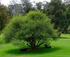 Lush green garden (devmunuswamy) Tags: park trees green nature garden walk trail fujifilm ooty parl f40 ootytour fujifilmf40 devmunuswamy