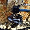 IMG_2627 (Pioneer Valley Frameworks) Tags: bike bicycle cycling handmade adventure dirtroad ultegra westernmassachusetts bikeporn bikeframe hilltown americanmade roadriding randonee shimano easthampton custombike tig usmade steelframe westernma madebyhand pioneervalley tigwelded d2r2 brevet randoneur madeintheus roadcycling madeintheusa bicycleporn steelisreal bikelove custombicycle butted steelbike nahbs paragonmachineworks handbuiltbicycle customframe bikelust truetemper lighttouring bikefitting handmadebicycle randoneurring tireclearance handbuiltbike handbuiltframe ui2 handmadebike gravelgrinder randoneuring madeinma dirtroadbike internalrouting madeinmassachusetts bespokebike electronicshifting adventurebybike bespokebicycle dirtroadriding buttedtubing explorebybike dirtroadbiking dirtroadrandonee brevetcycling brevetriding alldayriding alldaybike madeinmass madeinwesternmassachusetts pioneervalleyframeworks custombikeporn