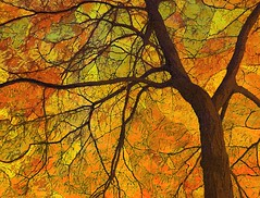 Colors of Autumn (scilit) Tags: autumn painterly abstract tree nature colors leaves season branches twigs artdigital trolled netartii