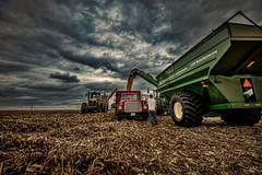 Supervising (StevanBaird) Tags: sunset tractor fall farmers farming combine soybeans wagons cornfarm maryrichards caseih graincart richardsfarm farmershelpingfarmers2015