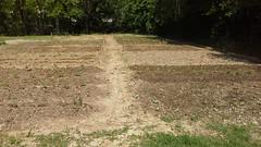 Orto di Abreer (4) (Comune di Reggio Nell'Emilia) Tags: reggioemilia ambiente orto urbani orti abreer