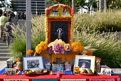 _DSC0048 (lnewman333) Tags: park ca usa festival dayofthedead losangeles colorful altar socal diadelosmuertos mariachi southerncalifornia alter dtla downtownlosangeles grandpark lauragarciacanosobrino