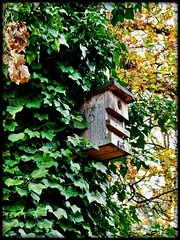 13 - Park Sanssouci, Potsdam (Andr-DD) Tags: park autumn trees tree fall leaves germany deutschland leaf herbst birdhouse blatt bltter bume sanssouci potsdam brandenburg baum parksanssouci vogelhaus