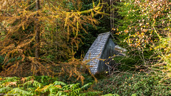 Hidden hut (tompickwellphotography) Tags: art wall forest cumbria concept conceptualart grizedale andygoldsworthy grizedaleforest lakedisctrict