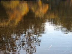 P20151117-0014—Lake Anza—Tilden Regional Park