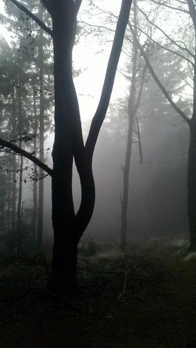 Hutwisch im Nebel 2