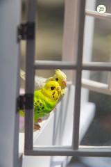 By the window (Ylang Garden) Tags: bird window corner miniature handmade rement dollhouse petit nendoroid gudetama