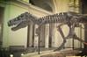 T-Rex (bt.taylorfamily) Tags: chicago museum skeleton fossil dinosaur rex trex carnivore tyrannosaurus tyrannosaur