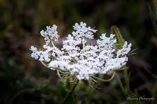 Wild flower n°9